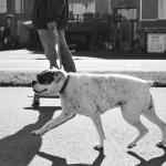 skate-dog_5106081848_l