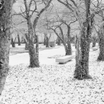 snow-ivy-trees_5530662007_l